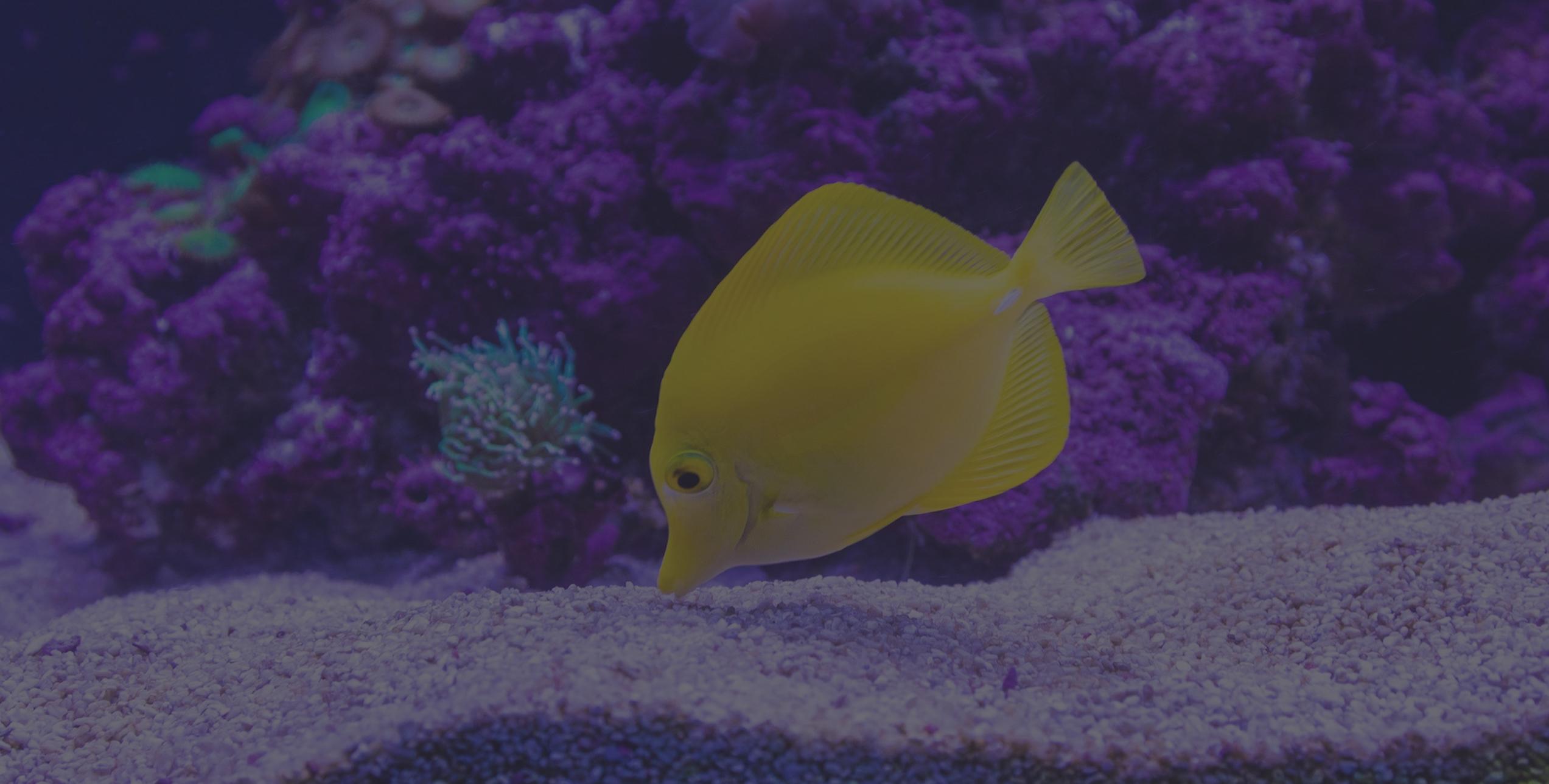 Canberra Aquarium Maintainance